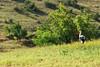 white stork (kosova cajun) Tags: summer landscape highlands macedonia pasture kosova kosovo pastoral whitestork ciconiaciconia makedonija kosovë rugova peisazh bogë rugovë maqedonia bjeshkë tikvešlake ezerotikveš