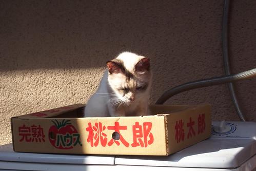 Today's Cat@2010-07-17