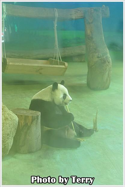動物園 - (11)