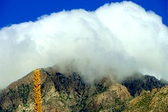 The Big Pillow (spysgrandson) Tags: cloud mountain texas desert sony elpaso sonycybershot elpasotexas desertmountain mountfranklin mtfranklin 071210 spysgrandson southmtfranklin