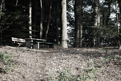 Bank im Wald (Arri.pictures) Tags: laub bank tisch wald bume