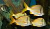 BW605 Tropical Fish (listentoreason) Tags: usa museum america canon aquarium newjersey unitedstates camden favorites places unknown vivarium camdenaquarium toflickr adventureaquarium ef28135mmf3556isusm score30 unknownfish fishidentification animalidentification