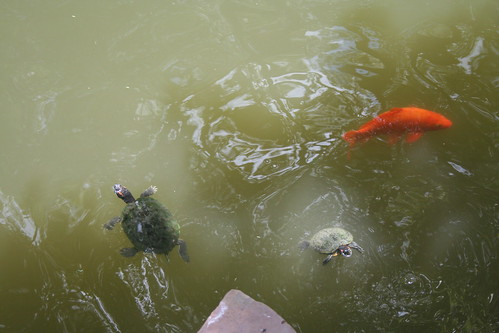 2010-07-25 - Yuyuan Garden - 10 - Pond life