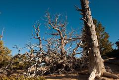 DSC_0115 (RutaSL) Tags: usa utah nationalpark bryce brycecanyon
