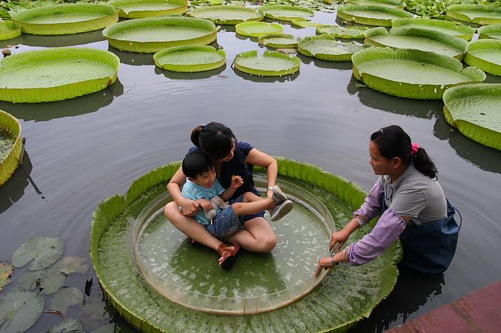 台南白河蓮花公園(水連公園)0040