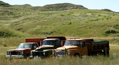 3 Trucks.  Tongue River Road,Montana. (montanatom1950) Tags: houses abandoned rural rust montana decay debris barns ruin trucks dust derelict sheds farmtrucks abandonedvehicles abandonedtrucks