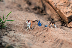 (alyjaros) Tags: scale bury sand jail shovels tinypeople prisoners 100mm28macro canon550d canont2i