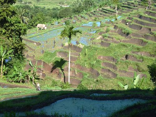 Bali-Tirtagangga (91)
