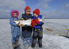 Big fish and little kids (Fish as art) Tags: winter people canada cold ice kids laughing fun photography vinter fishing nikon nwt kinder arctic netting norra inverno talvi yellowknife isfiske subarctic outdooradventure yellowknifebay eisfischen bestcatch stenodus yellowknifeliving grandepesce grospoissons paulvecseiphotography