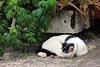 IMG_0461 (翔志) Tags: taiwan taipei 台灣 台北 貓 taipeicounty 台北縣 侯硐 houtong 猴硐 瑞芳鎮 貓村 catvillage rueifangtownship houtongcatstreet 百貓街