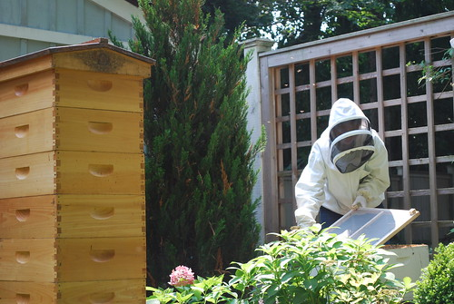 Alison, all geared up for safety, works in one of the three apiaries she has in her backyard. Her efforts help promote healthy gardens and vegetation in her neighborhood and beyond.