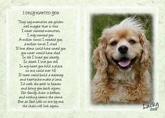 personalized pet memorials