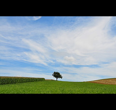 THE ONE TREE IMAGE (VINCENT MOYASHI) Tags: blue sky white nature field landscape austria europe harmony fields supershot abigfave theunforgettablepictures updatecollection ucreleased magicunicornverybest selectbestexcellence sbfmasterpiece