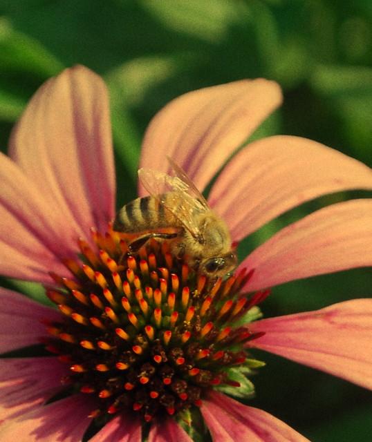 Bee tint