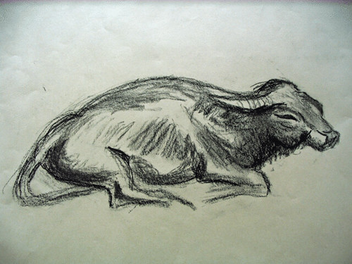 Water Buffalo; charcoal drawing