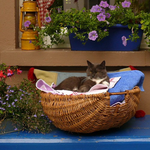 clothes-basket with cat