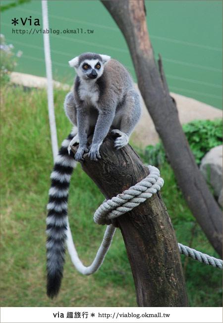 【新竹住宿】來去和動物住一晚~關西六福莊生態渡假旅館18