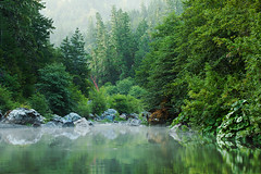 Misty Mornin':  Humboldt County, CA (Ivan Sohrakoff) Tags: california longexposure morning usa mist misty forest sunrise river landscape humboldt moss oak sand rocks sandbar willow fir mad riverbank humboldtcounty alder evaporation madrone bridgeville pilotrock oldgrowth madriver douglasfir firtrees californialandscape landscapephotography californialandscapephotography ivansohrakoff
