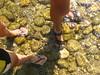 piedi nell'acqua!