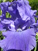 Azure azimuth. (davidezartz) Tags: uk greatbritain pink blue light england brown white mountain black orchid flower macro green london nature leaves sunshine yellow closeup grey petals nikon shadows view purple earth glasgow azure scottish orchidaceae poet mauve distance hue enchantment magicalmoments robes azimuth thomascampbell e3100 thegalaxy nikone3100 nikonstunninggallery abigfave citrit theunforgettablepictures rubyphotographer dragondaggeraward platinumpeaceaward vividstriking mygearandme azureazimuth 17771844 thepleasuresofhope