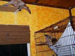 Pua comes to see Mandua