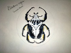 Goliath Beetle (Prismacolor Pencils) (Kyzclaw) Tags: insect arthropod coleoptera goliathbeetle prismacolorpencils goliathusregius