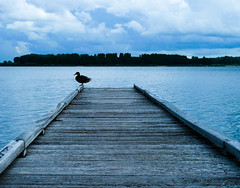 Lonely duck (Channed) Tags: lake holland vakantie meer nederland thenetherlands quay mooring recreation plas beemster steiger zaanstreek paviljoen recreationarea twiske hettwiske recreatiegebied paviljoenttwiske chantalnederstigt