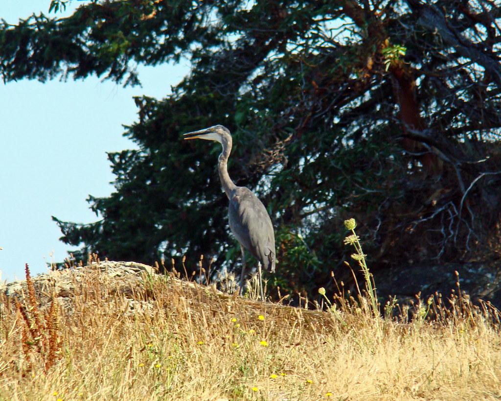 2010-08-15 Portland Island 002 copy