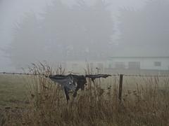 Witches' Knickers (Ian@NZFlickr) Tags: cloud rain wind farm plastic nz otago dunedin bale aotearoa covering feance flickrsbest