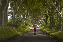 Dark Hedges (Mick h 51) Tags: road trees ireland summer umbrella canon eos arch sigma avenue northern 1020 beech antrim armoy modelreleased 450d stranocum darkhedges bregagh gettyimagesirelandq1