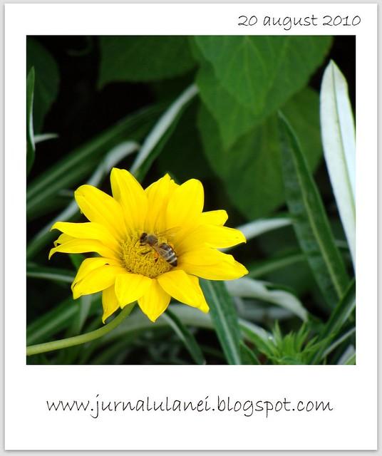 floare in parcul copilariei mele