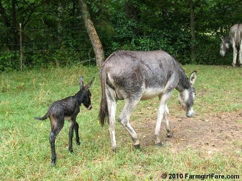 Esmeralda's Baby Boy 16