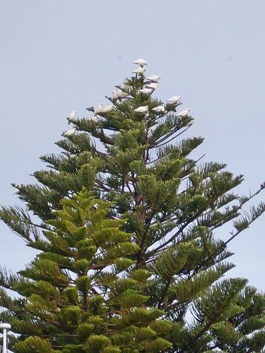 Correls on tree
