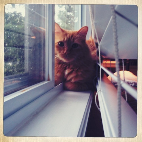 cat in window.