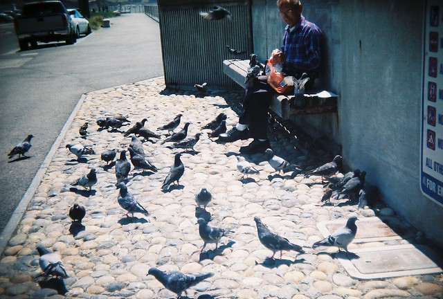 feeding the pidgeons