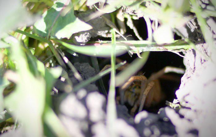 08-25-spider