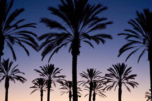 Palm Tree Sunset Mexi-Cali Border