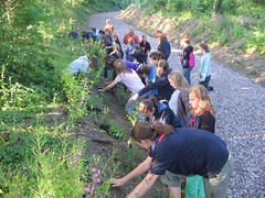 Local Guides taking part in our wild flower planting program