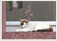 Lina - vorwitziges Katzenmädchen Lina - meddlesome catgirl