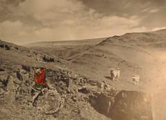 Hugh Hughes: Red Bird over mountains
