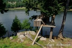 Parc Omega (MacEnsteph) Tags: canada qubec fox parcomega montebello renard omegaparc