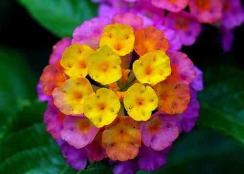 flower-10082807 by AlexanderY
