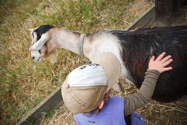 summer scrapbook :: slide ranch camp