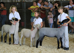 Jr. sheep showmen