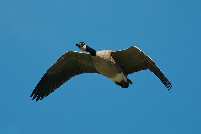 Gliding Through A Blue Sky