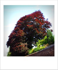Four Seasons - Summer (Andrew Buck) Tags: camera city morning trees roof summer sky colour tree me window nature sunshine gardens canon catchycolors landscape four rebel cornwall colours seasons view parade truro somethingblueinmylife eos450