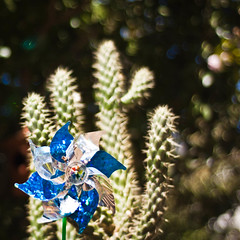 Whimsy Above All Else (CarbonNYC [in SF!]) Tags: blue cactus garden whimsy bokeh metallic organic pinwheel juxtaposition carbonnyc carbonsf