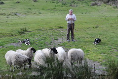 Brendan Ferris of the Kells Sheep Centre (Marcus Meissner) Tags: field collie bestof sheep marcus centre border august irland september kells reise 2010 studiosus meissner