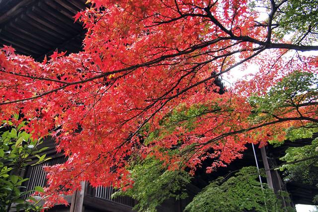 20101114_083543_西大寺