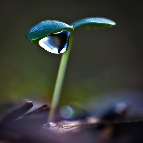 フリー写真素材, 花・植物, 植物(その他), 雫・水滴,